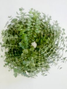 SOOTHING EUCALYPTUS SHOWER AND BATH RING